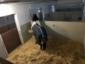 foto box pupilaje de caballos en Madrid
